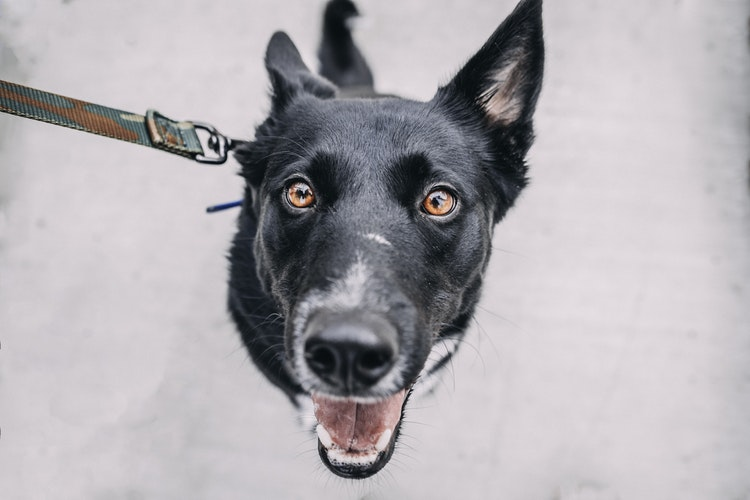 Promenade de votre chien